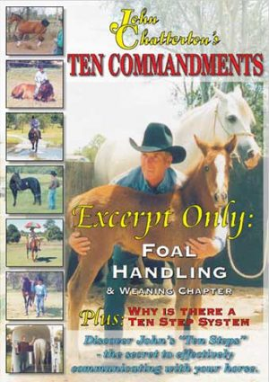 Foal Handling and Weaning