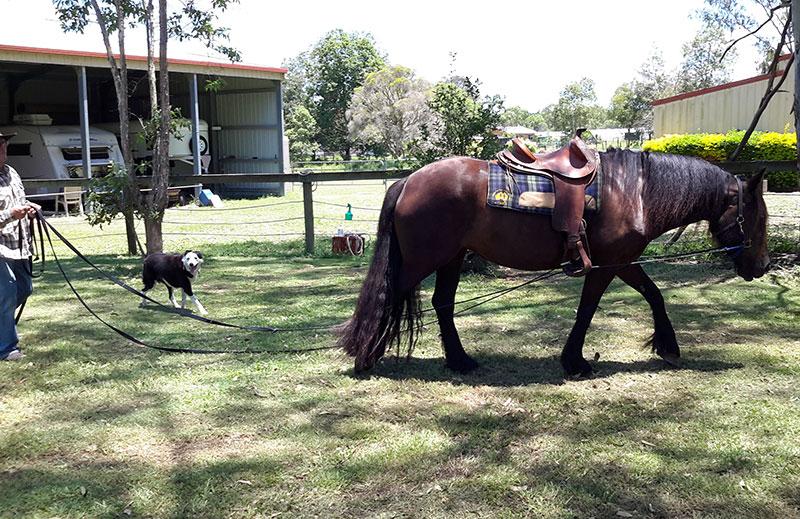 long reining horses